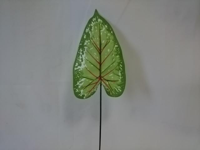Лист диффенбахии с прожилками, L=35 см, ш 10 см, 1 штука.
