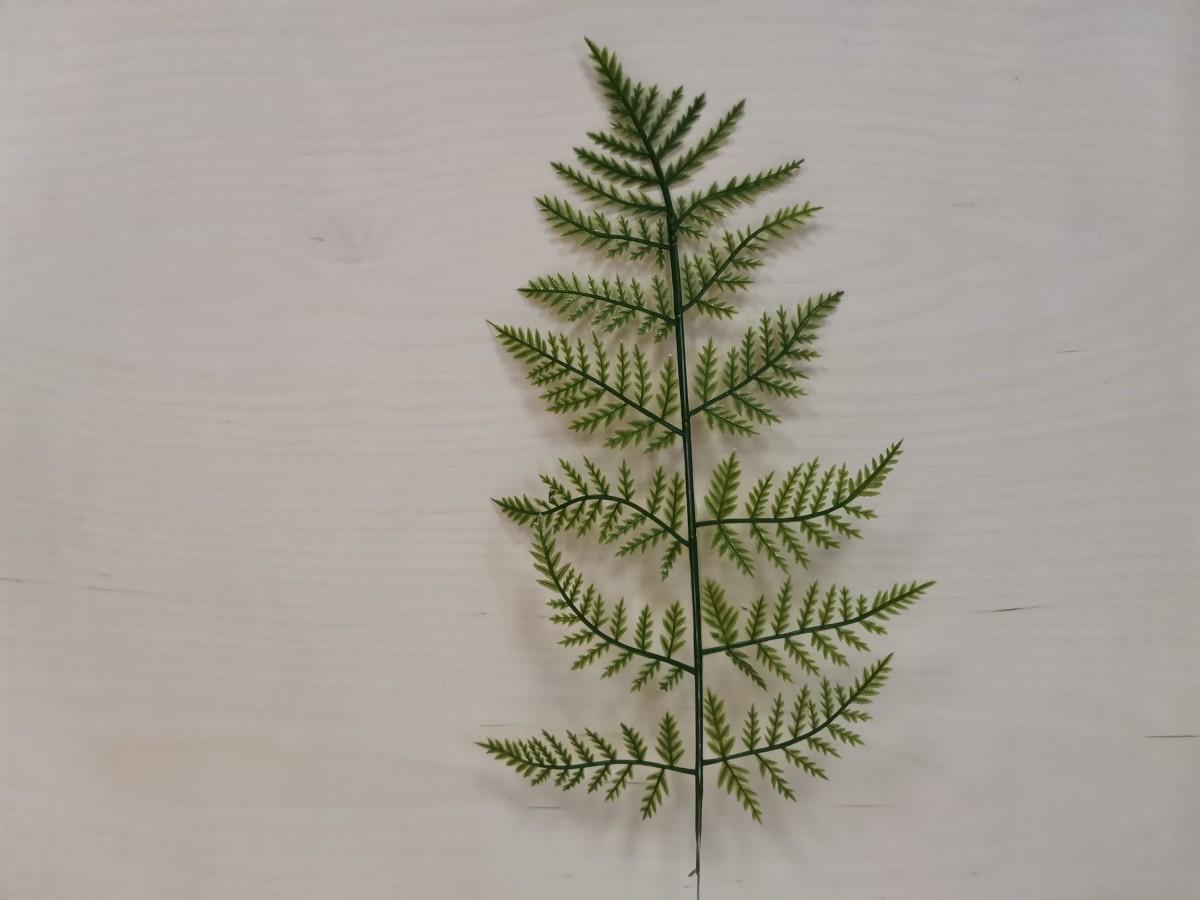 Лист Папоротника лесного, 33/44 см, 1 штука.