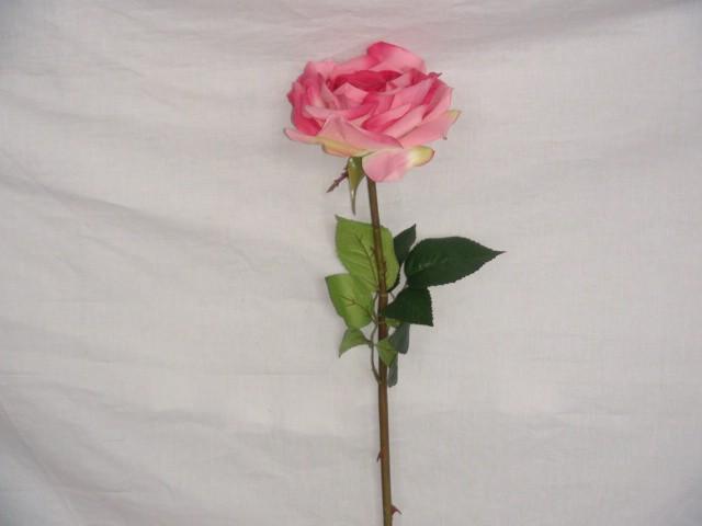 Роза 62 см., D=13 см., малиновая